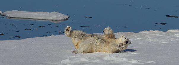 Работа вахтой в Арктике в марте 2017 года вакансии здесь